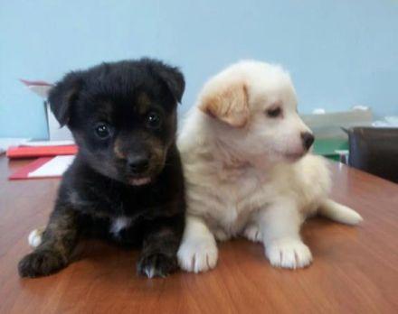 cani vista, cani ciechi