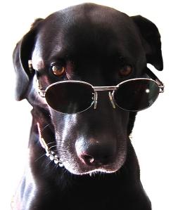 cane cieco vista