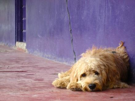 depressione cani