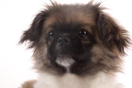 cane vista, oculista cani, cani ciechi