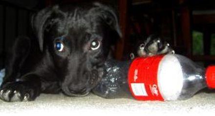 cani senza vista arriva un cucciolo