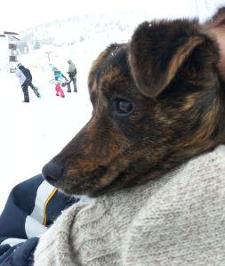 cani senza vista maya neve