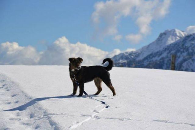 calendario cani senza vista
