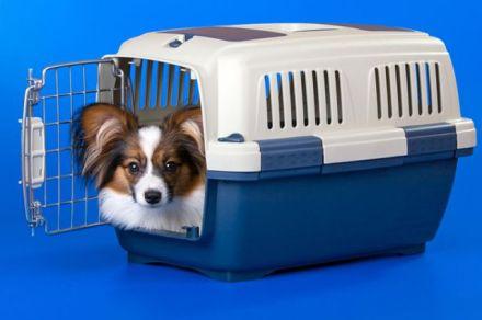 cani senza vista crate