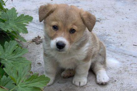 cani senza vista cucciolo