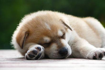 cani senza vista puppy