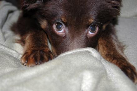cani senza vista scent marking
