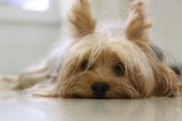 cani senza vista cuciolotto
