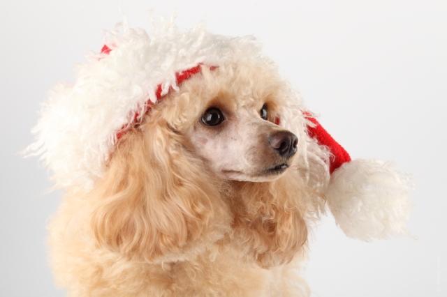 cani senza vista natale