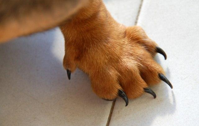 cani senza vista tatto