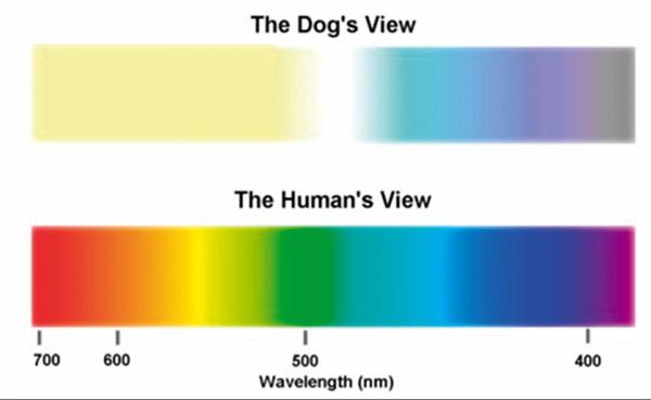 cani senza vista spettro