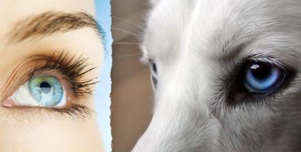 cani senza vista 2