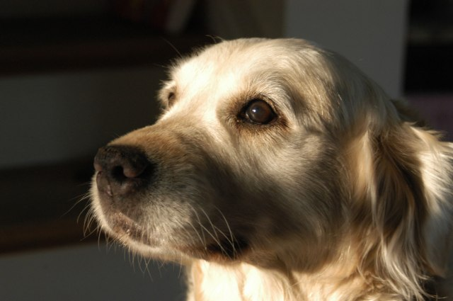 cani senza vista luce