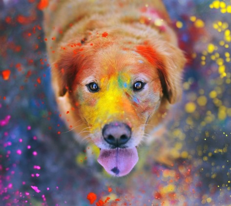 cani senza vista dog color
