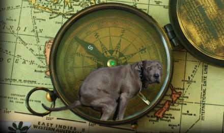cani senza vista magnetismo