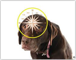 cani senza vista scienza