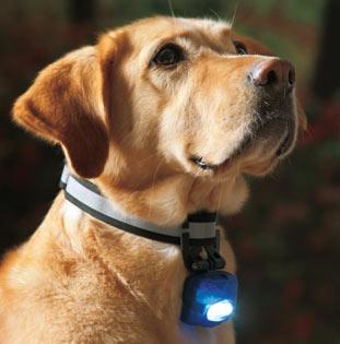 cani senza vista collare