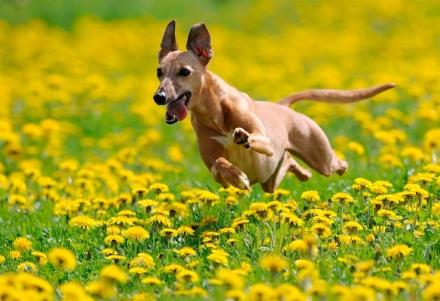 cani senza vista allergie