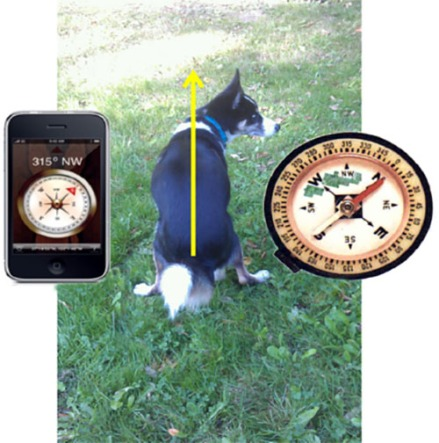 cani senza vista - senso magnetico