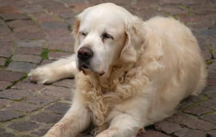 cani senza vista anziani