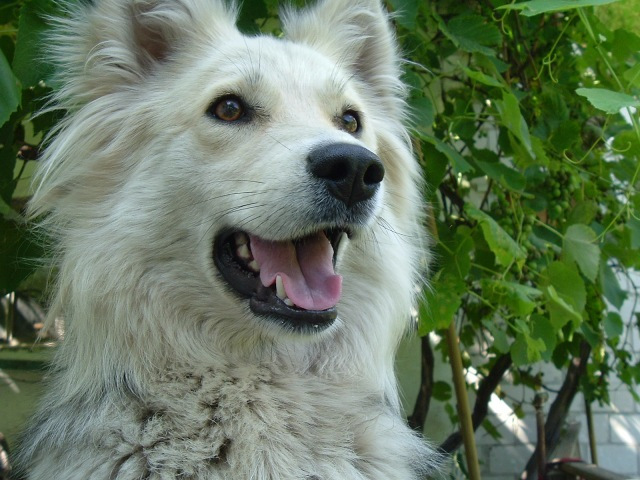 cani senza vista - anziani
