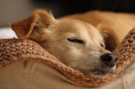 cani senza vista cure fai da te