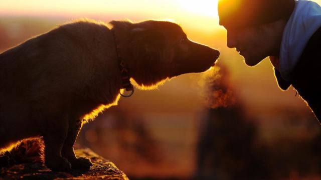 cani senza vista odore padrone