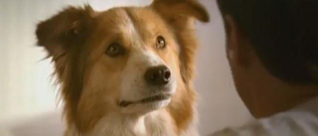 cani senza vista attenzione