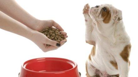cani senza vista alimentazione