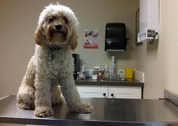 cani senza vista intervento