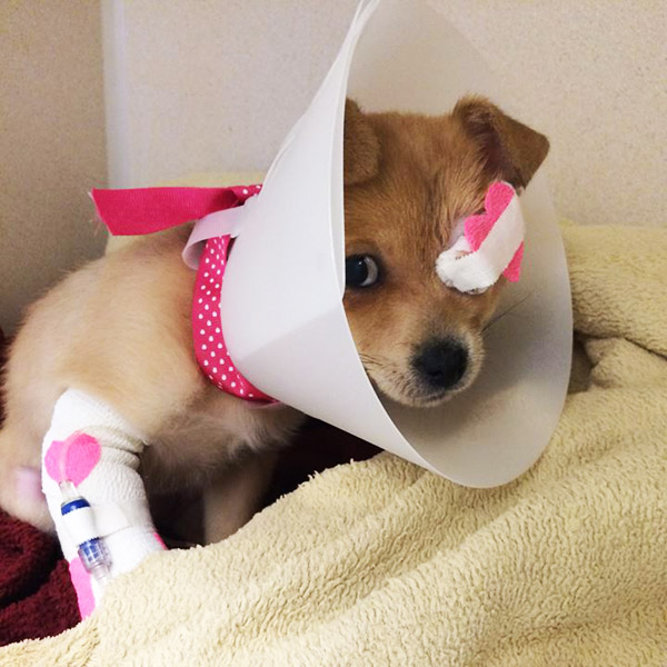 chirurgia occhio cane