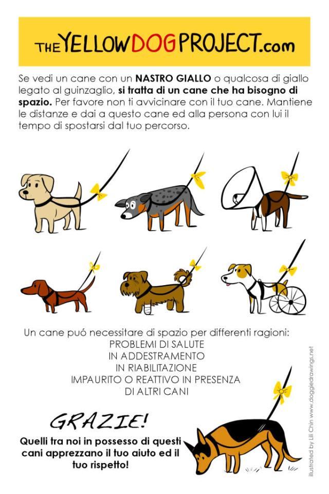 yellow dog project cani senza vista