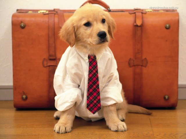 cani senza vista week end