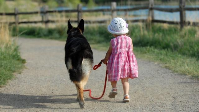 cani senza vista percorsi