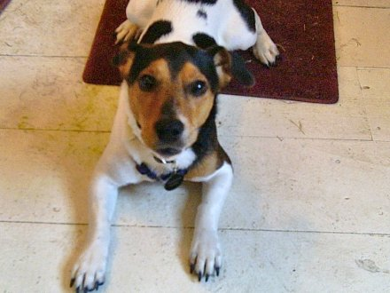 cani senza vista addestramento