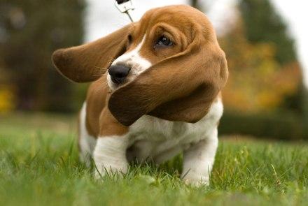cani senza vista vai piano