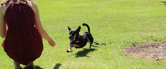 cani senza vista richiamo