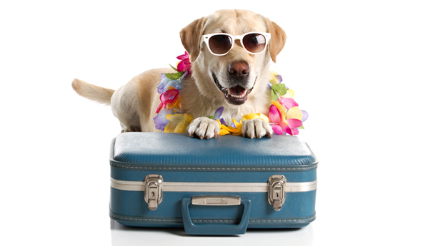 cani senza vista scottature; cani senza vista estate