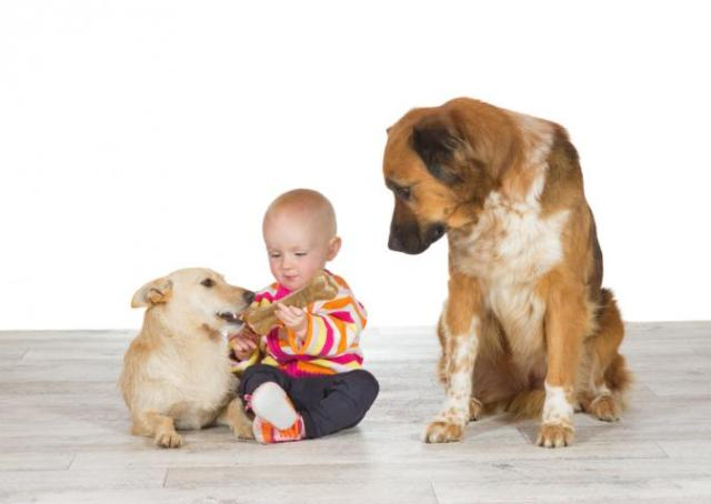cani senza vista gelosia