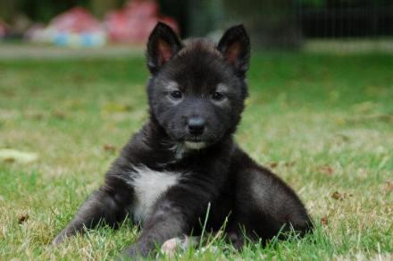 cani senza vista voce