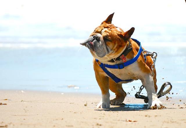 cani senza vista mare
