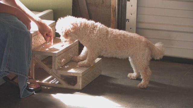 cani senza vista scale