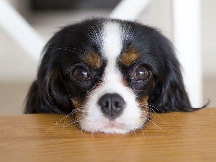 cani senza vista gradini