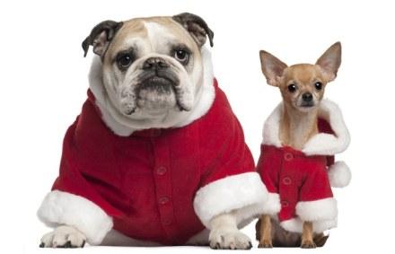 concorso cani senza vista