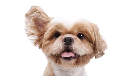 cani senza vista ascolto