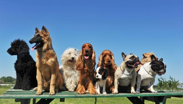 cani senza vista linguaggio