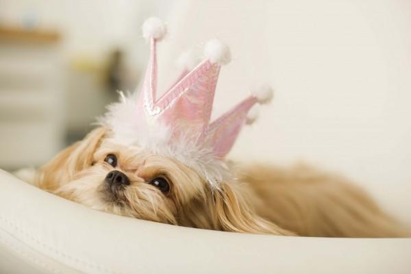 cani senza vista principessa