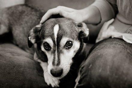 cani senza vista coccole
