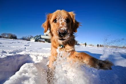 cani senza vista neve
