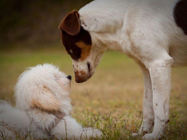 cani senza vista socializzazione